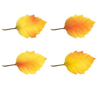 秋の色の変化に現実的なハンノキの葉。