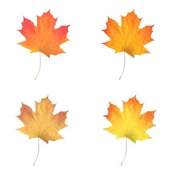 Реалистичные кленовые листья, изолированные на белом