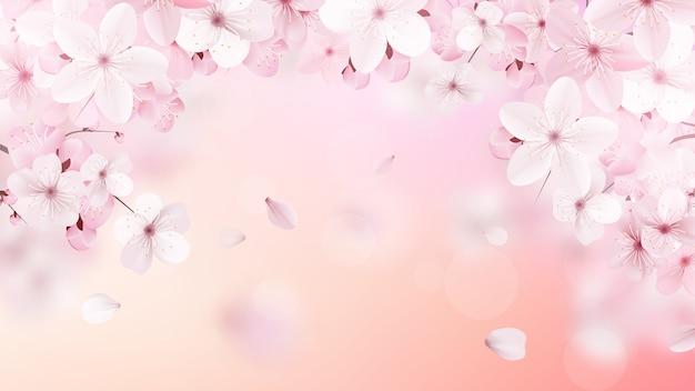 Цветущие светло-розовые цветы сакуры.