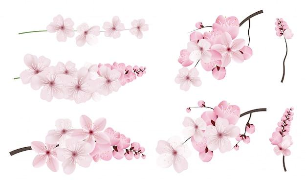 濃いピンク色の桜の花。