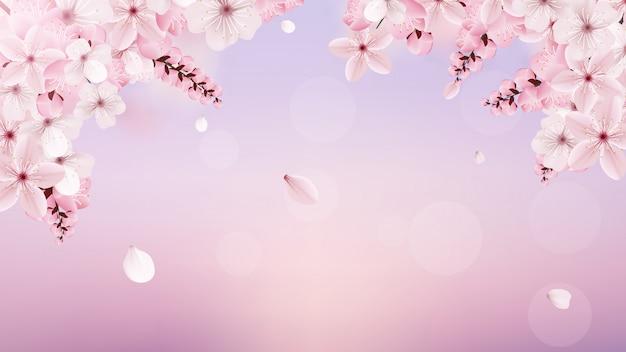 Цветущие светло-розовые цветы сакуры