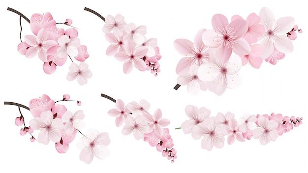 Темные и светло-розовые цветы сакуры.