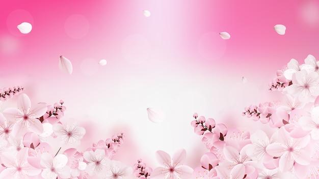 Фон с цветущими светло-розовыми цветами сакуры
