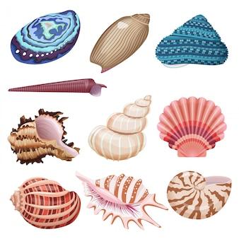 ベクトル貝殻セット。