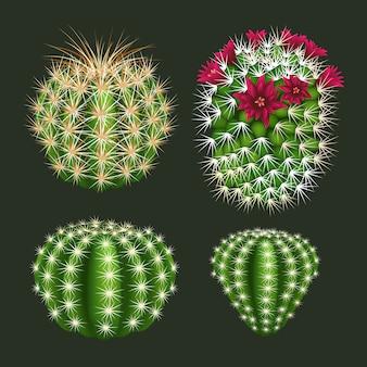 Реалистичные круглый значок кактуса набор векторных изолированных