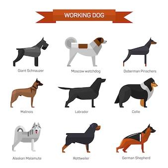 Породы собак векторный набор изолированных. иллюстрация в плоском дизайне в стиле. лабрадор, маламут, ротвейлер, колли, немецкая овчарка.