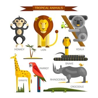 Тропический вектор животных установлен в плоском дизайне в стиле. птицы джунглей, млекопитающие и хищники. зоопарк сборник мультфильмов. лев, обезьяна, крокодил, змея, коала.