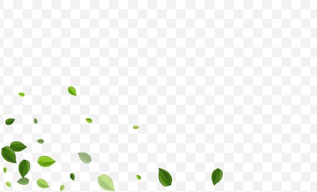 ミントの葉。ライムの葉