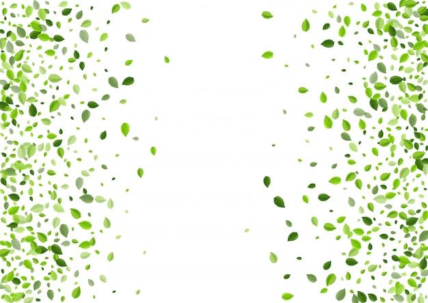 ライムの葉の有機ボーダー。フライングリーフ