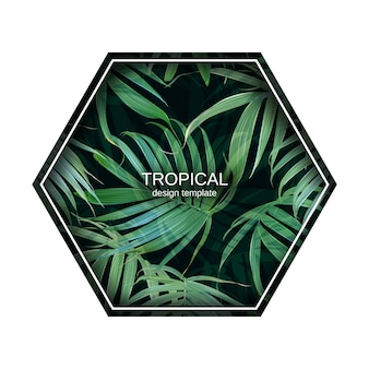 Вектор пальмовых листьев шаблон. тропические листья. банановый лист фон.