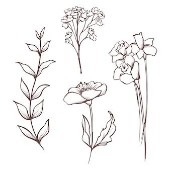 花のコレクション。手描きセット花と葉。咲く組成。