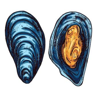 ムール貝の手描きイラスト