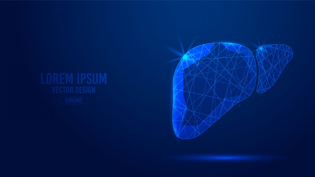 肝臓の人間の臓器の幾何学的な線、低ポリゴンの三角形スタイルのワイヤフレーム