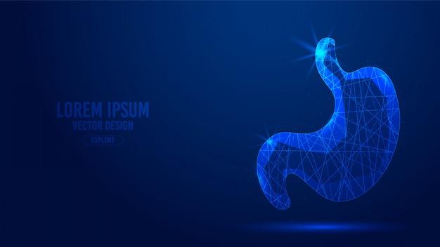 胃の臓器の幾何学的なライン、低ポリゴンの三角形スタイルのワイヤフレーム