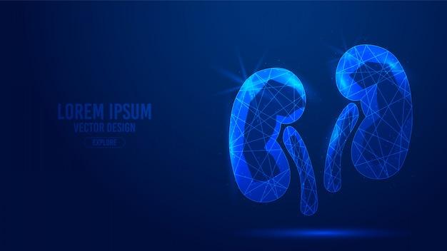 腎臓の人間の臓器の幾何学的な線、低ポリゴンの三角形スタイルのワイヤフレーム