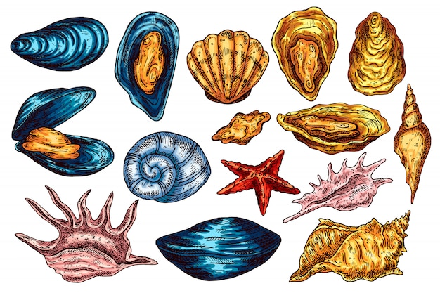 ビンテージ貝殻のセット。