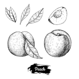 桃の手描き。