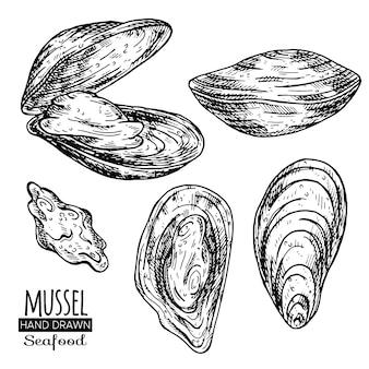 ムール貝の手描き