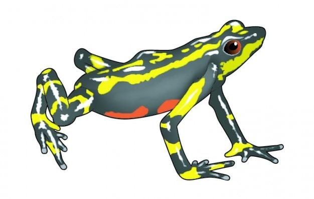 横からのカエルの画像