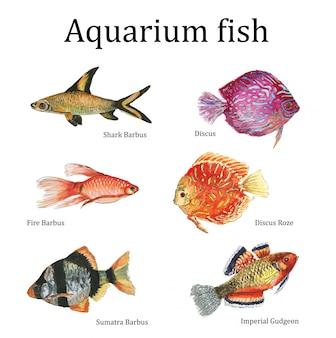 Акварельные аквариумные рыбки