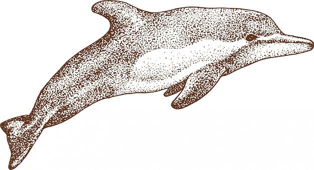 イルカの点描画