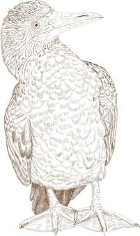 青足ブービーの彫刻図面イラスト