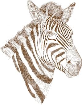 Гравюра рисование иллюстрация зебра