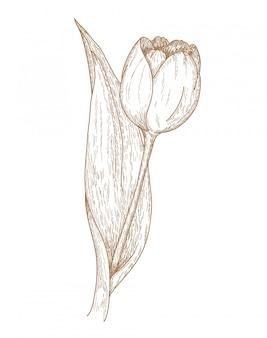 チューリップの花の彫刻図面