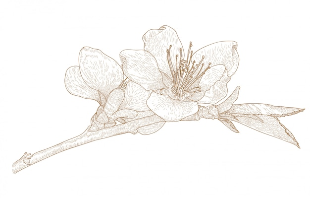 桜の花の彫刻図面