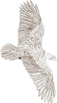 Гравюра рисунок орла