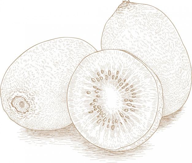 キウイフルーツのイラストを描く