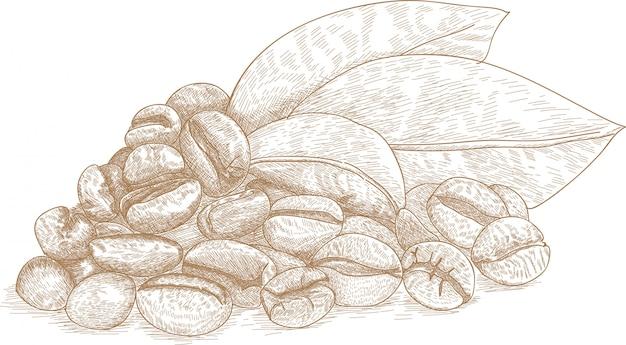 Рисование иллюстрации кофе в зернах