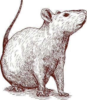 Гравюра рисования иллюстрации мышки китайский новый год