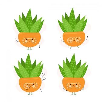 Симпатичные счастливые сочные растения в горшках