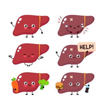 人間の肝臓器官セットのコレクション。