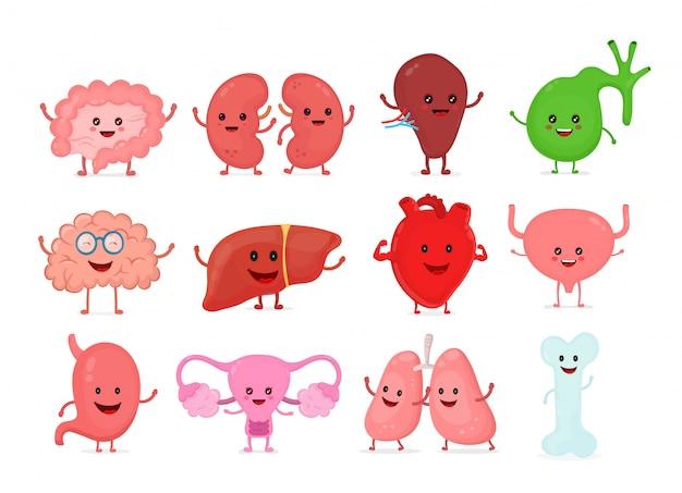 かわいい笑顔幸せな人間の健康な強い臓器セット。