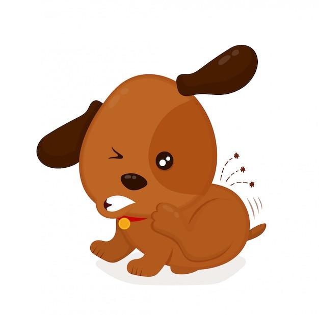 Милая злая собака зуд царапает блох.