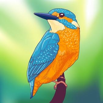 Красочный зимородок птица на ветке