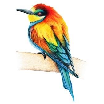 Пчела пожиратель рисованной птицы акварельные цветные карандаши