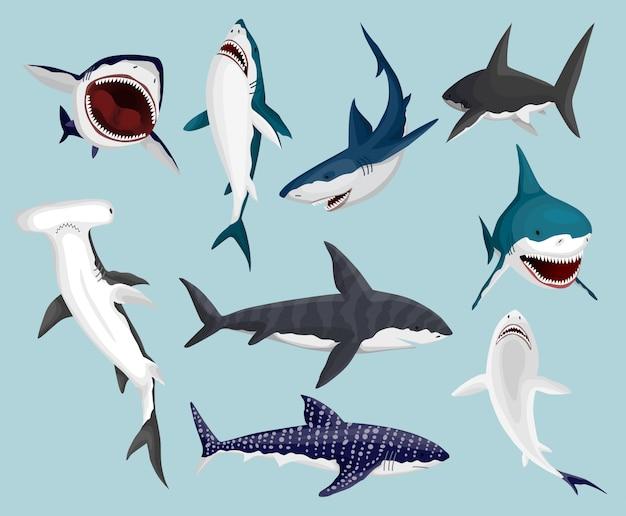 サメを漫画します。怖い顎と泳いでいる怒っている海のサメ。大きな危険な海洋捕食者。海洋生物のイラスト。野生の魚セット