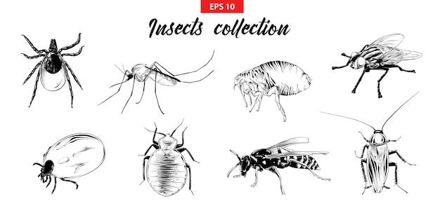 昆虫の手描きスケッチセット