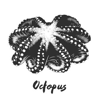 Ручной обращается очерк осьминога в монохромном режиме