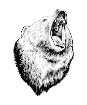 Эскиз медведя в черном