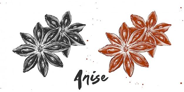 星アニスの手描きのスケッチ