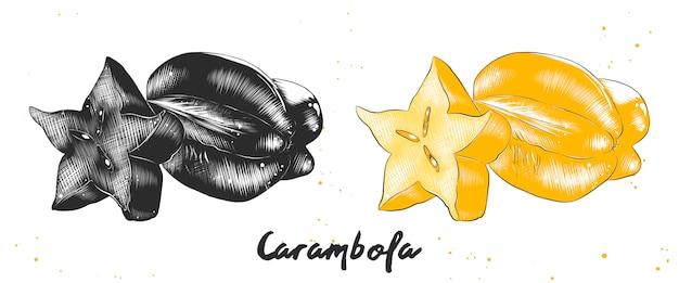 カランボラ果実の手描きのスケッチ