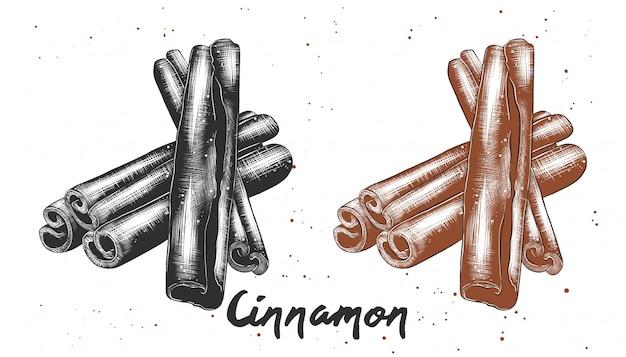 シナモンの手描きのスケッチ
