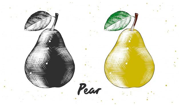 梨の手描きのスケッチ