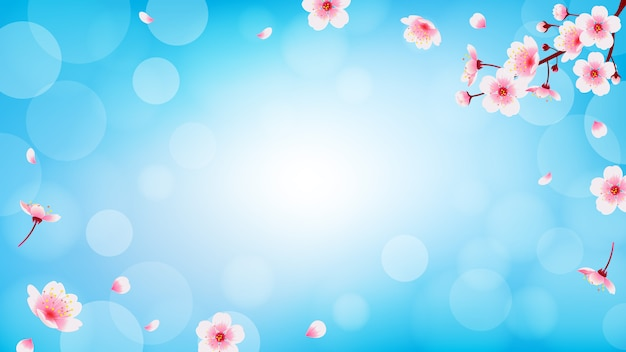 落下の花びらの背景を持つ春の桜