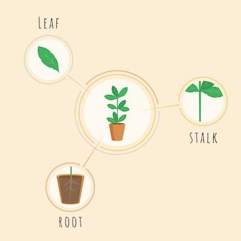 植物構造ベクトルバナーテンプレート