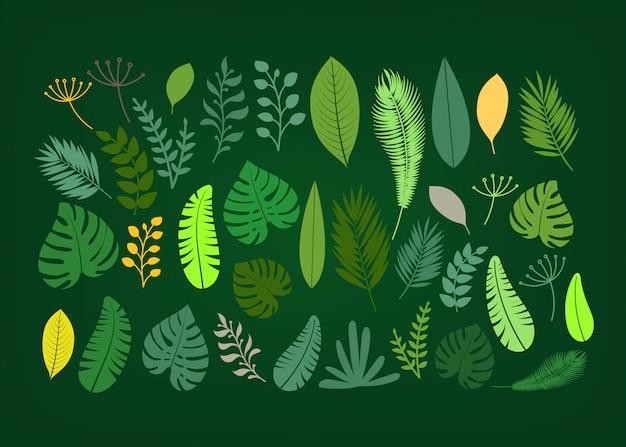 夏の季節のエキゾチックな葉ベクターコレクション